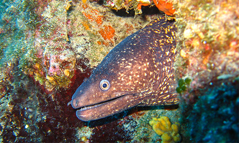 marine life antibes moray