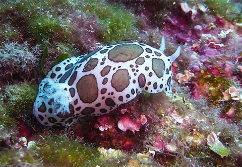 marine life antibes nudibranch and their eggs
